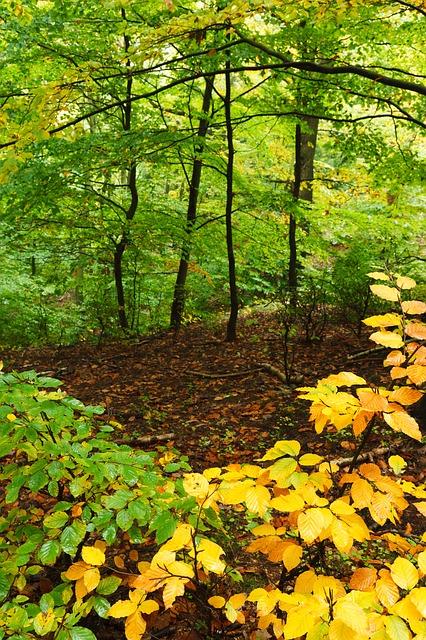 autumn-21831_640