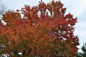 autumn-218997_640