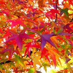 leaves-18051_640