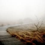 fog-258232_640