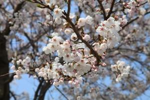 spring-flowers-709602_640